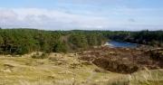 Hoornse bos-Koegelwieck Terschelling